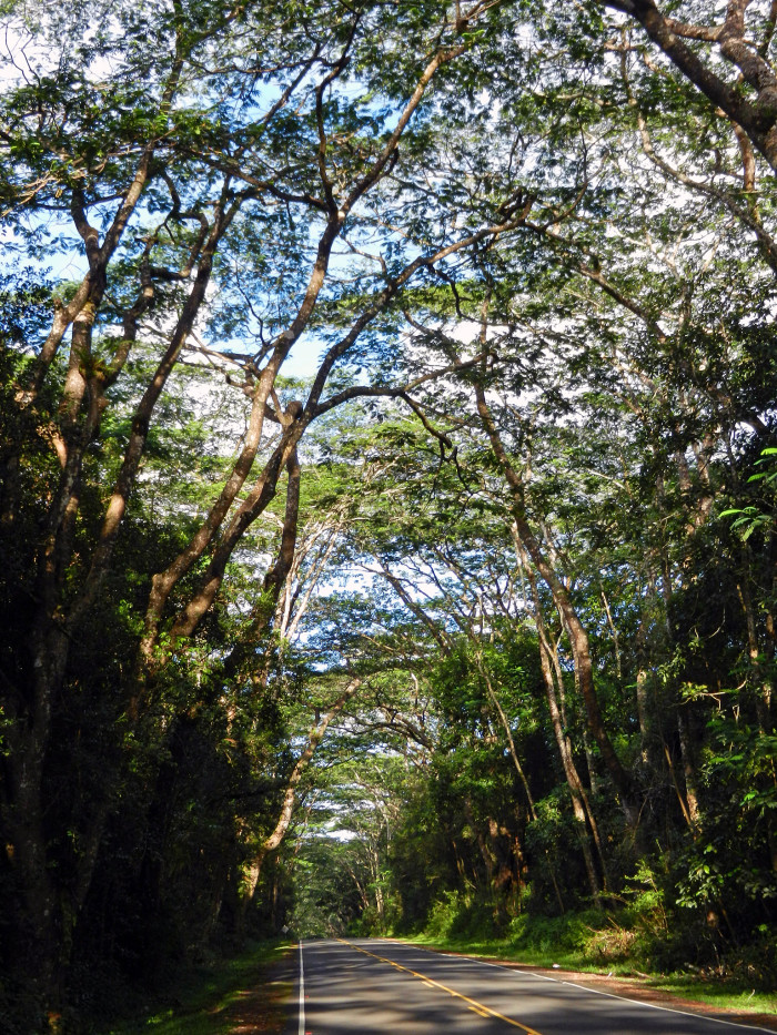 10) Nanawale Forest Reserve, Big Island