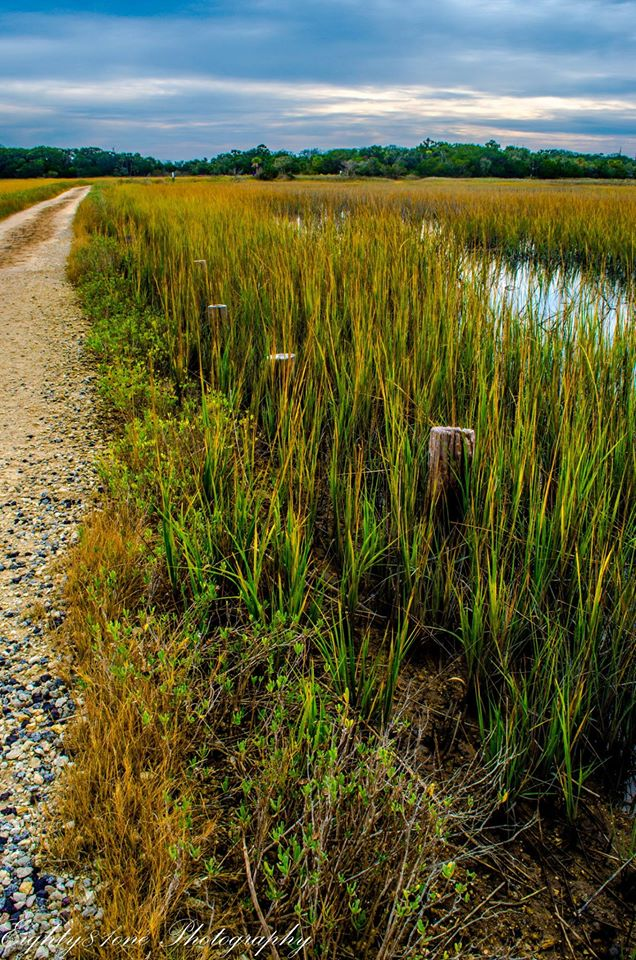 22.  Nancy Garvin captured the marshes in beautiful twilight on Botany Bay in a gorgeous way. I love the texture and color of the marsh grasses in the foreground.