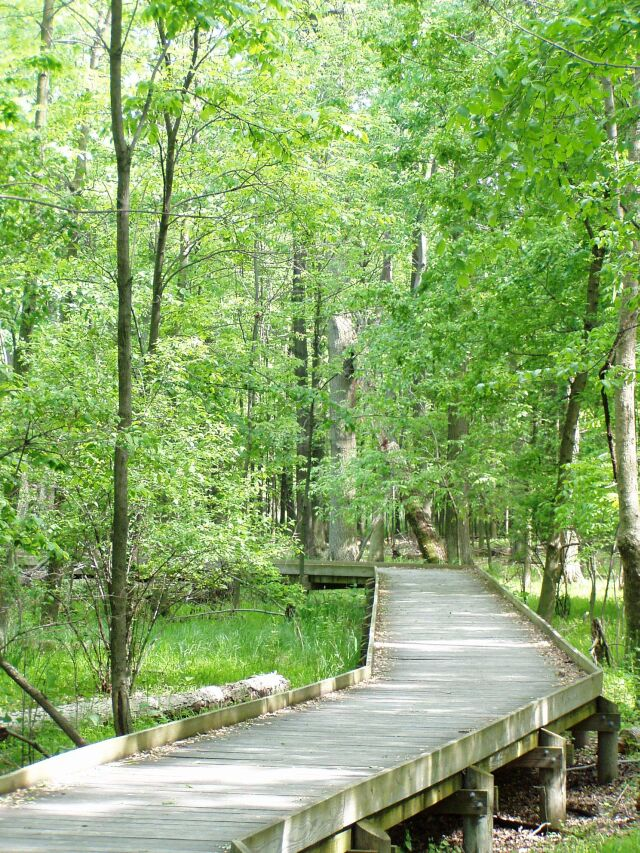 5. Maumee State Forest (Fulton, Henry and Lucas counties)