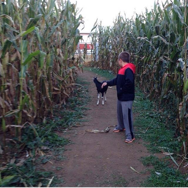 6. Pirate Adventure Corn Maze