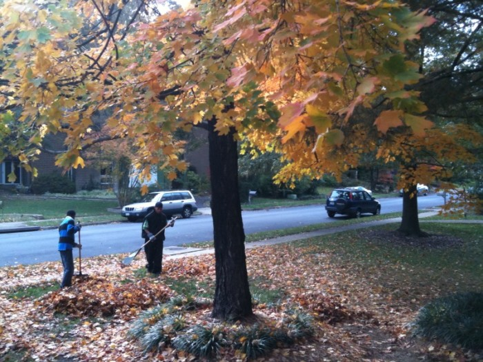 7. Remember that bit about fall foliage? It doesn't stay. So, we rake. And then rake again. And usually at least once more.