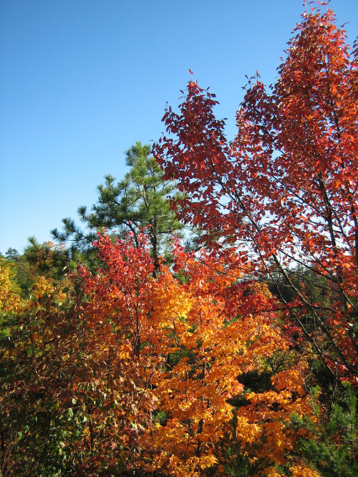 2. Red River Gorge