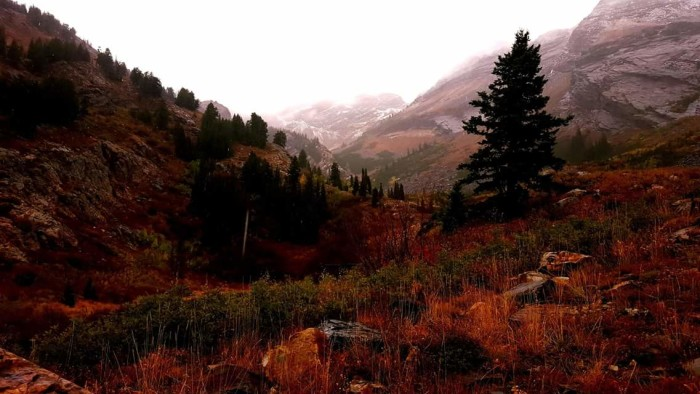 12. This is Robert Moore's photo of Broads Fork Trail, Big Cottonwood Canyon.