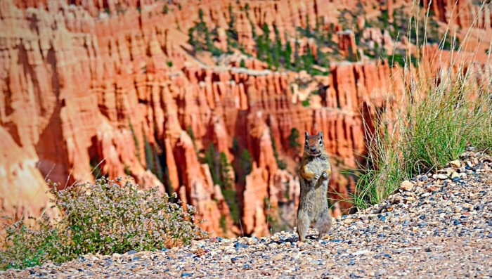 19. How did Sarah Godwin Peterson get this adorable chipmunk to pose at Bryce Canyon National Park?