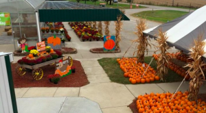 Don't Miss These 10 Great Pumpkin Patches In Kentucky This Fall