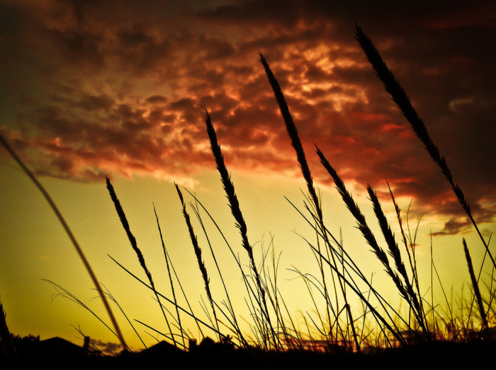 5. Sea oats in silhouette at the northern tip of Virginia Beach.
