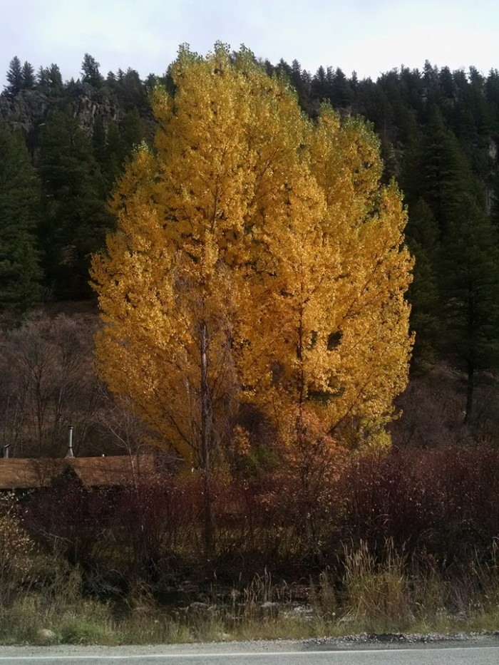 15. This is Sheridan Jung's photo of fall trees.