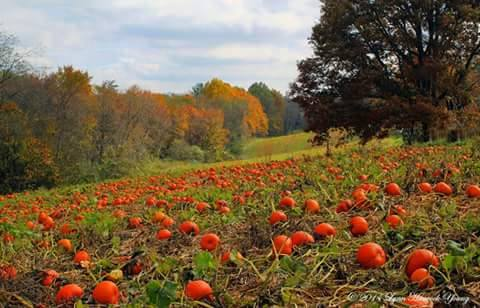 16. This Southwest Virginia pumpkin patch looks too perfect to be real. Submitted by Lynn Hancock Young.