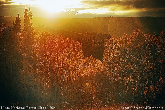 15. Steven Wittenberg's submission is of the Uinta National Forest.