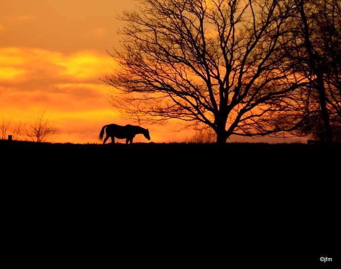 11.  The spirit of KY via Janet McClanahan.