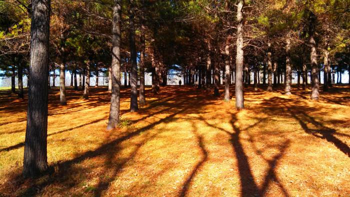 3. The sun illuminates the forest floor in Lexington.