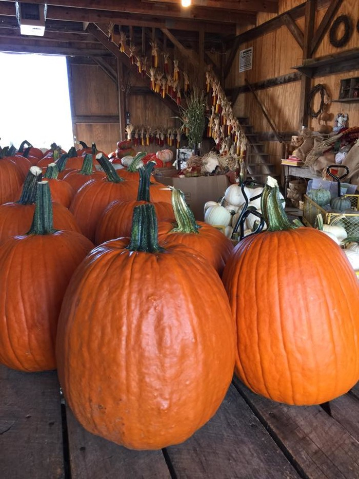 1. Two Sisters Pumpkin Patch