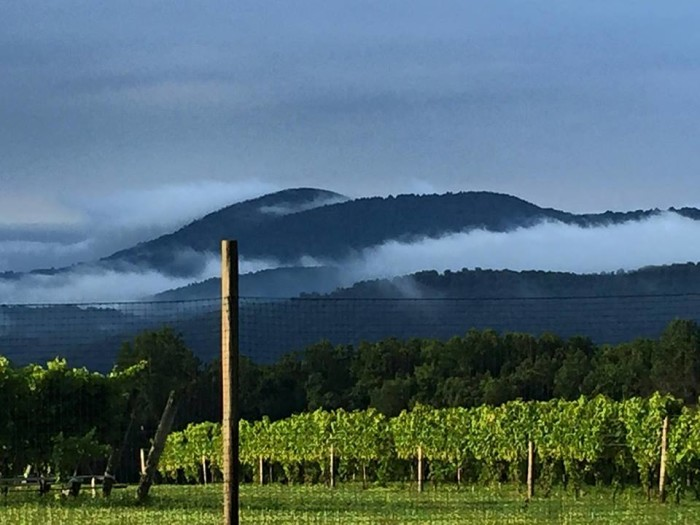 12. Early morning at a vineyard on Freezeland Road atop Blue Mountain in Linden, submitted by Mindy Stephens.