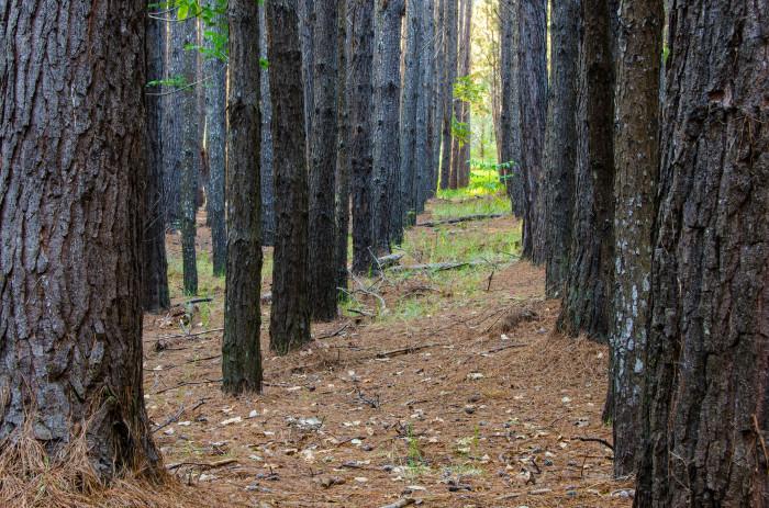 9) Waihou Springs Forest Reserve, Maui