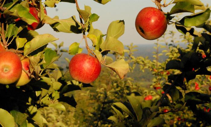 3. We go apple picking.