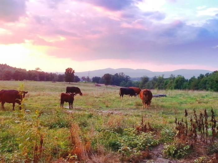 3. Stacy Staples-Wozniak took this great one of a farm in Ballard.