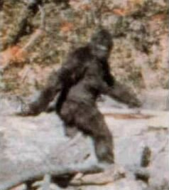 5. Bigfoot sighted in West Virginia