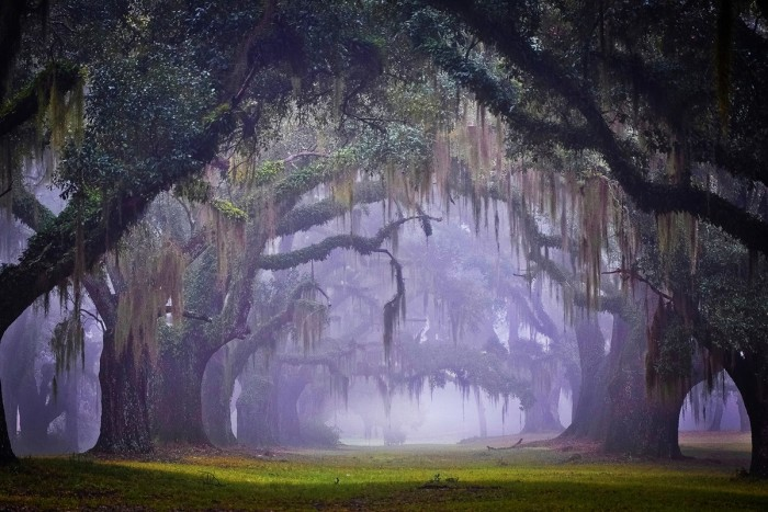 7) Greenwood's Oak Alley on a Misty Morning by Bonnie Campbell Marquette