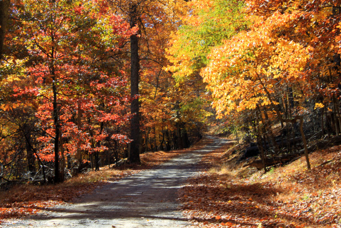 West virginia state parks with lovely fall foliage views for West fall