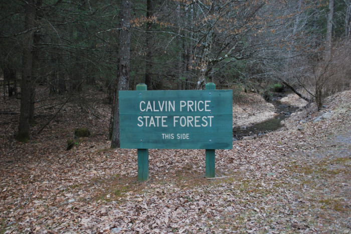 3. Calvin Price State Forest