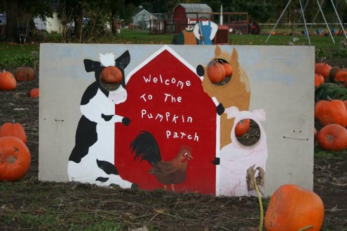 4. The Pumpkin Patch, Centralia
