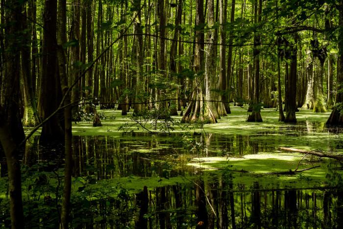5) Chicot Lake