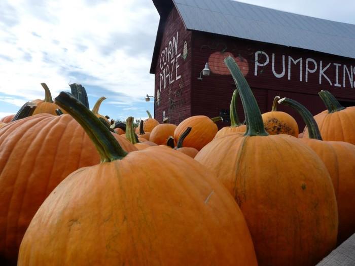 6.  Colville Corn Maze & Pumpkin Patch