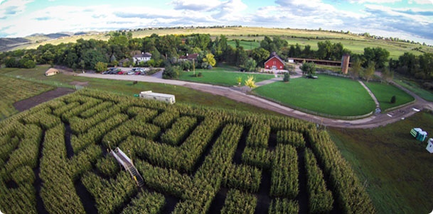 Best Corn Mazes In Colorado