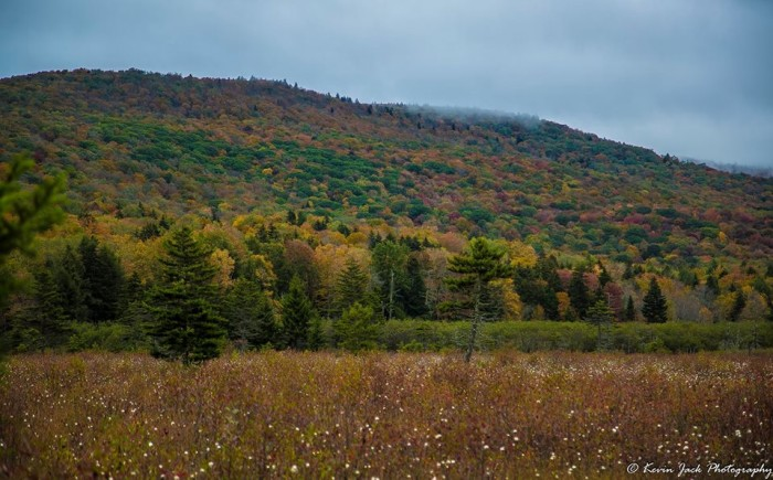 13. These fall colors at Cranberry Glades