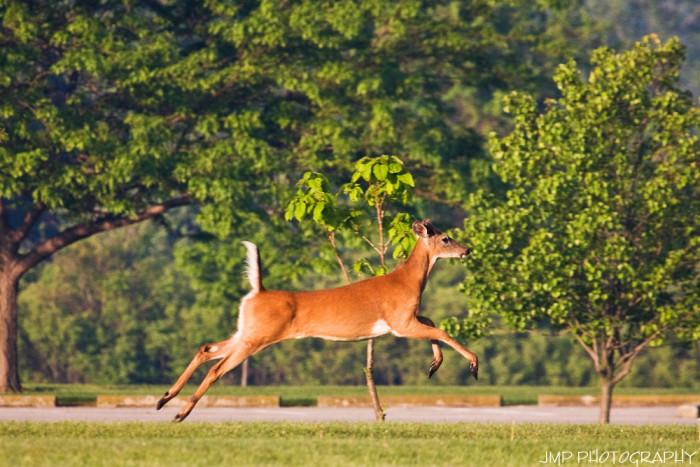 2. Deer