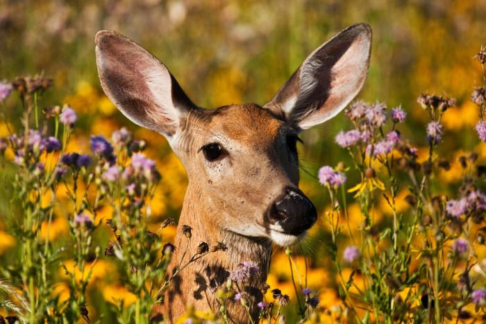 3. I'd ban deer within 100 feet of roadways.