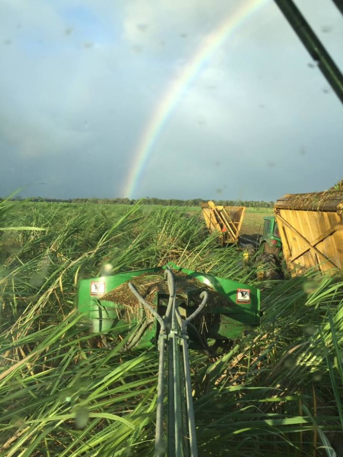6) View from the cab of a sugarcane chopper/harvester combine, with a post-Patricia rainbow. By Ellen Martin.