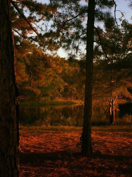 15. Beautiful Fall by Sherri Pierce Rice