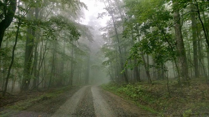 6. An interesting shot of a foggy road in Alton (Upshur County).