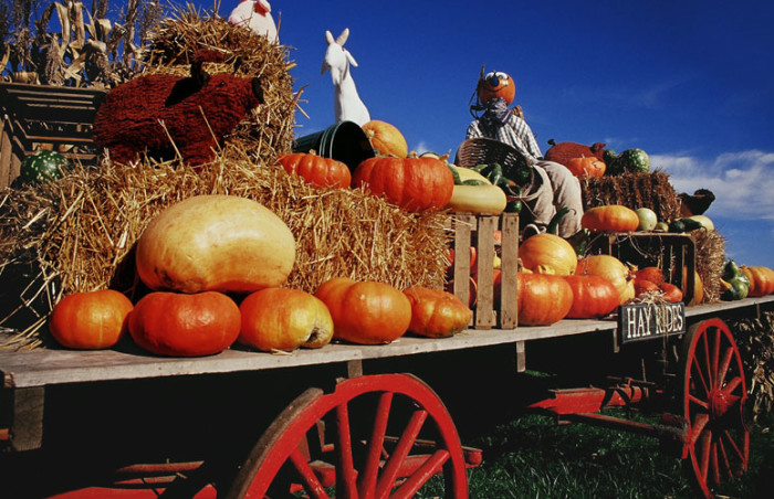 7.Wellwood Orchards – Springfield, VT.