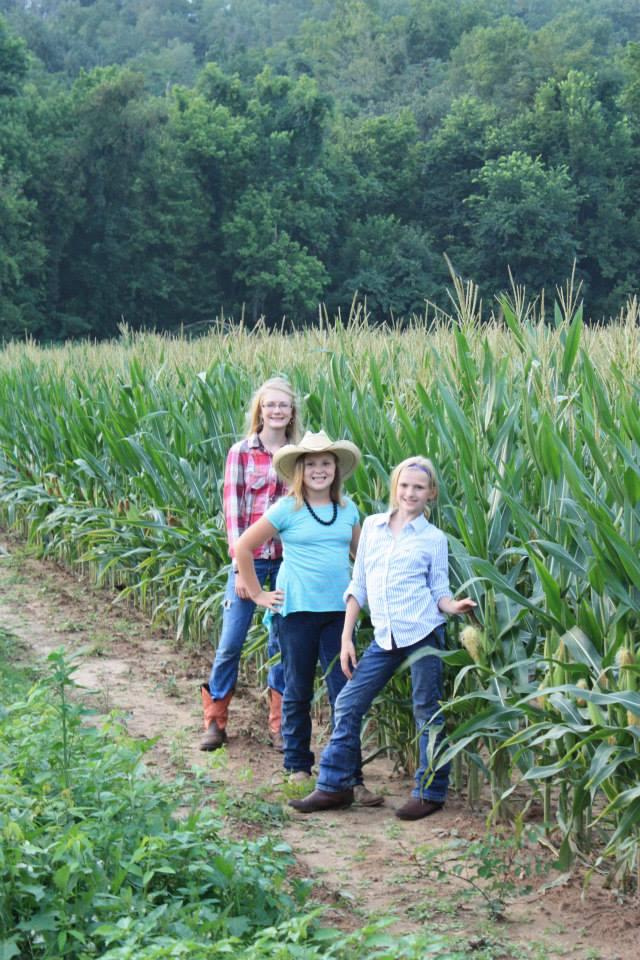 6. Hog Holler Corn Maze