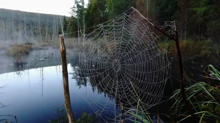 12) This intricate web, shot by Dale Sutton.
