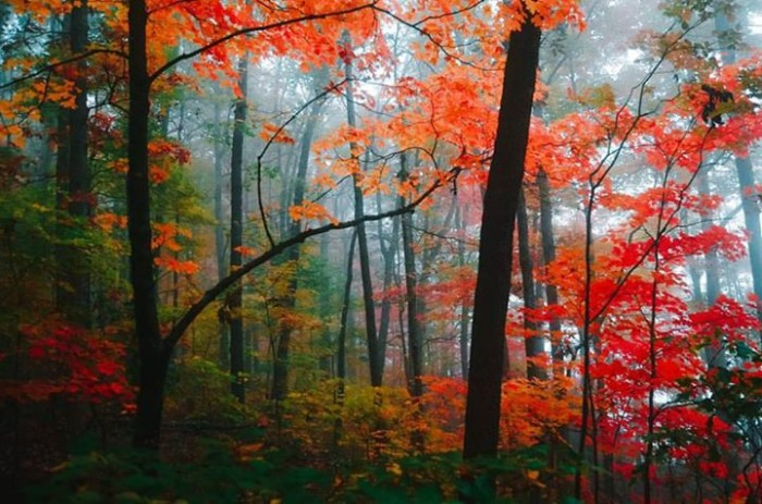 5. Autumn in the Ozarks by Joshua S. Carlson