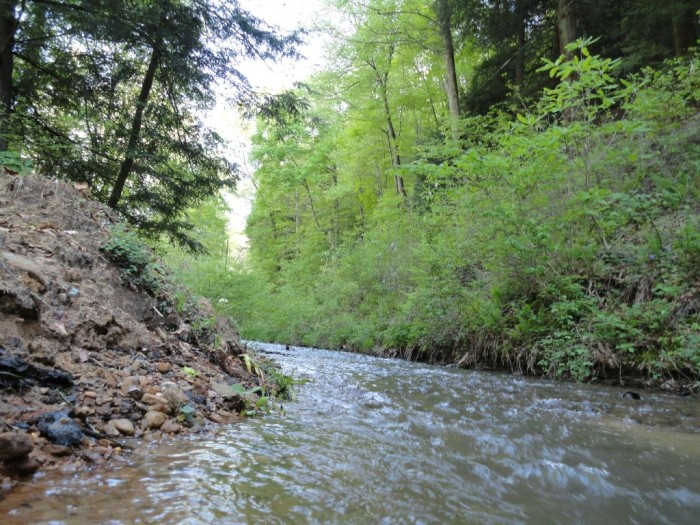2. Kanawha State Forest