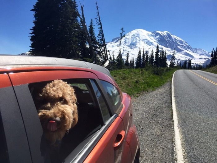 2. Krayton Keith sent us this great photo from his Sunday drive at Mount Rainier National Park!