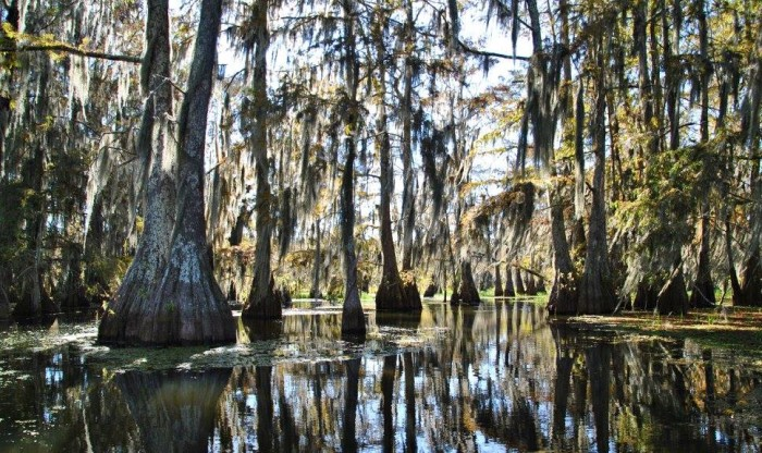 8) Cypress in Lake Martin by Aurore Pewez