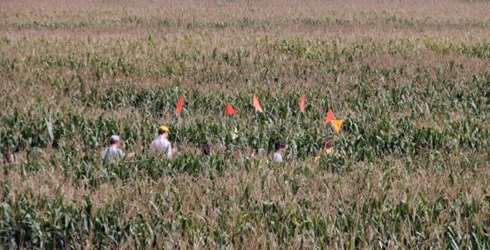 2. Corn Maze at Lollie