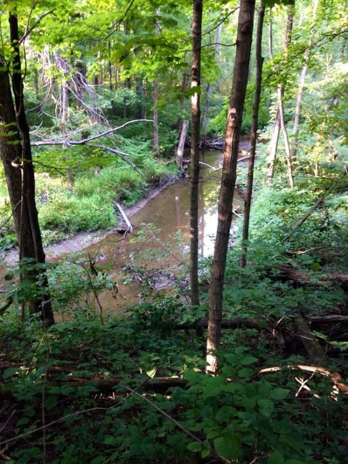 11. Ritchey Woods Nature Preserve