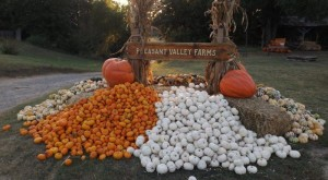 Don't Miss These 15 Great Pumpkin Patches In Oklahoma This Fall
