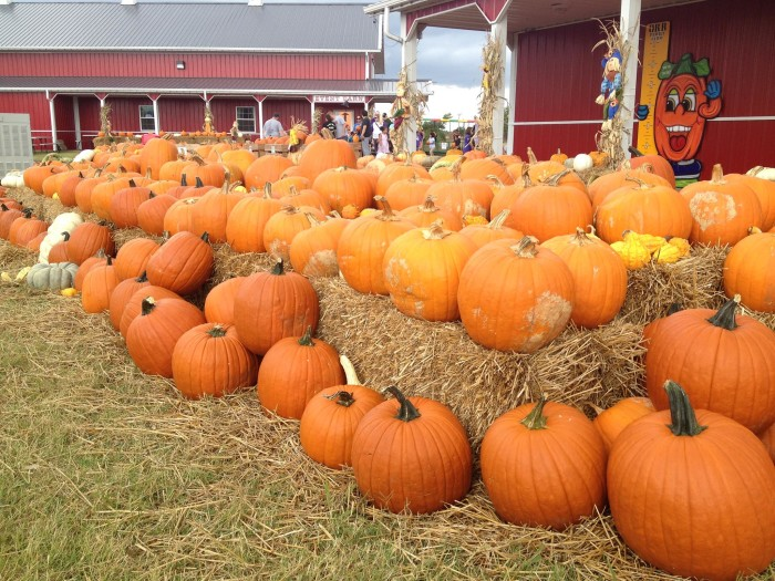 4. Go to the pumpkin patch and pick the perfect pumpkin for carving.