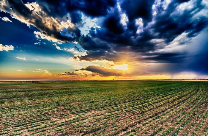 12. This wheat field and sky look remarkable.