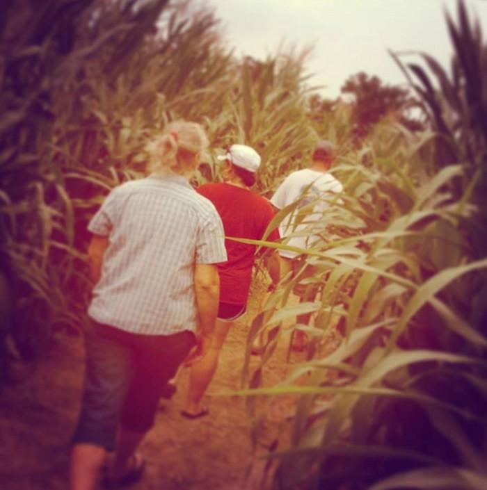 4. Ozark Corn Maze