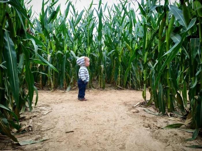 3. Peebles Farm and Corn Maze