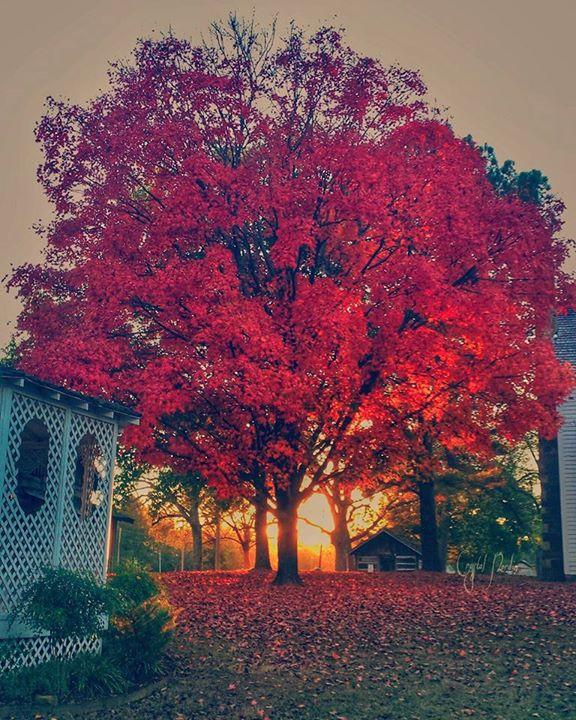 7. Pottsville Tree by Crystal Nordin