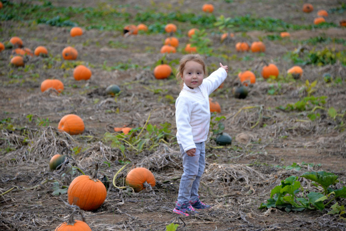 6. We set out to pick the perfect pumpkin.